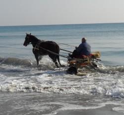 Alassio cavalli al mare 2