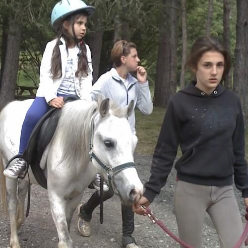 Nava cavalli 7