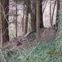 Nella boscaglia vicino al paese si può abbandonare impuniti anche un vecchio motorino esente dalle spese della discarica comunale