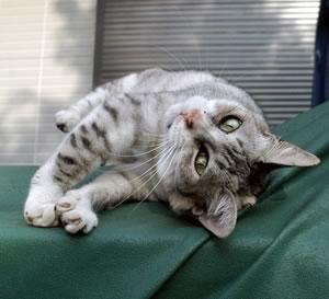 Poesia della settimana/ La gattina Savonese