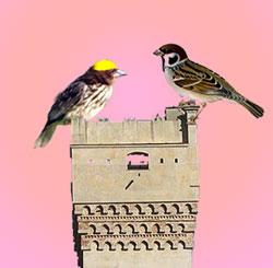 La poesia della settimana/ Savona passere e uccelli