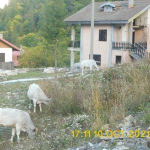 Le 2 Monesi a 5 anni dal 'diluvio'. Nuova seggiovia coperta da detriti. A Monesino mucche nei giardini delle case. Fiduciosa attesa da ottimisti